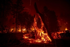 A tree stump smolders as the Dixie fire jumps Highway 395 south of Janesville, Calif., on Monday, Aug. 16, 2021. Critical fire weather throughout the region threatens to spread multiple wildfires burning in Northern California. (AP Photo/Ethan Swope)