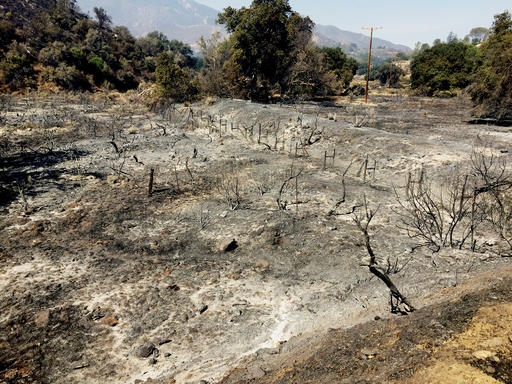 A plot of farm land burned by the Sand Fire wildfire is seen in Santa Clarita, Calif., on Sunday, July 24, 2016. Two massive wildfires raged in tinder-dry California hills and canyons Sunday, leaving thousands of homes evacuated and authorities to investigate a burned body found in a neighborhood swept by flames. Firefighters have been trying to beat back a fire since Friday that has blackened more than 34 square miles of brush on ridgelines near the city of Santa Clarita and the Angeles National Forest. (AP Photo/Matt Hartman)