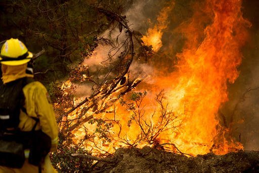 A firefighter battles a wildfire near Morgan Hill, Calif., on Wednesday, Sept. 28, 2016. A growing and destructive wildfire moved toward remote California homes in the Santa Cruz Mountains on Wednesday as it scorched its way through bone-dry brush and trees. (AP Photo/Noah Berger)