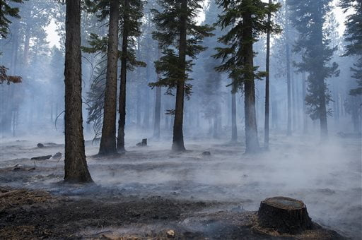 Strong winds blow smoke through the trees during the Emerald Fire along Highway 89, Friday, Oct. 14, 2016 on the southwest shores of Lake Tahoe. The blaze that burned about 200 acres northwest of South Lake Tahoe, California was one of three wind-whipped wildfires burning along the Sierra Nevada. The largest one destroyed more than 20 homes in a rural valley between Carson City and Reno, Nevada. (Randall Benton/The Sacramento Bee via AP)