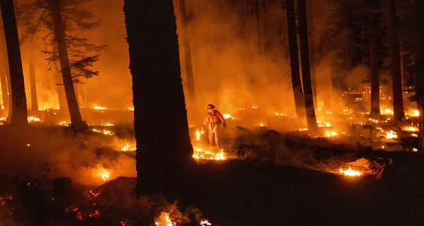 Firefighter with drip torch at Dixie Fire