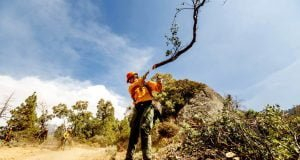 A member of the Roosevelt Hotshot Crew clears a firebreak