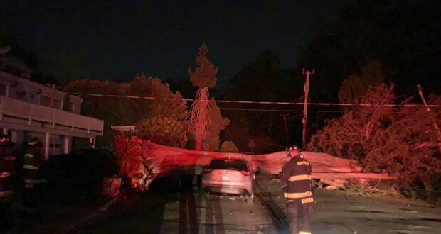 Firefighter with tree on vehicle after high wind event